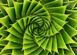 Natural Spiral